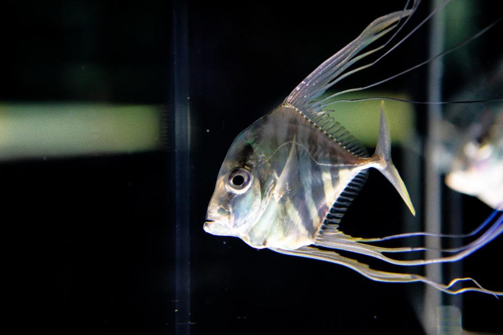 ニフレル水族館